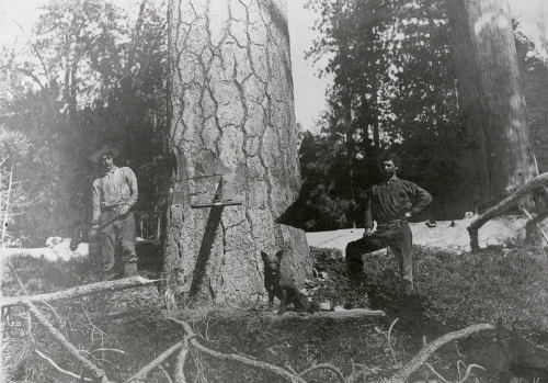 manuel-lumberjacks1