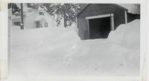 White Pines 1949