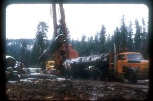 Loading-big-log