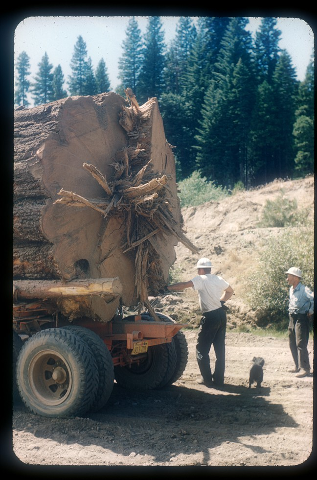 50 s photos from the blagen mill sierra nevada logging for Mill log