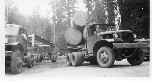 Trucks in Yosemite 1952